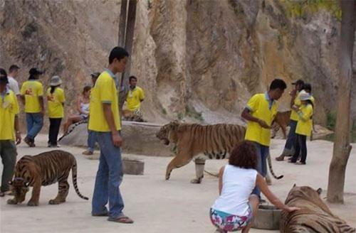 Этот храм находится в настоящих джунглях, у подножия гор. О был открыт одним из тайских монахов в 1994 году примерно в 200 километрах от Бангкока, рядом с границей с Бирмой. И носит труднопроизносимое название Wat Pa Luangta Bua Yannasampanno. Однако, не в этом его главная особенность…А главное то, что храм открыт не только для людей, но и для зверей…